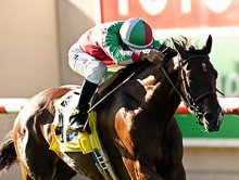Hollendorfer Duo Part of Even Yellow Ribbon