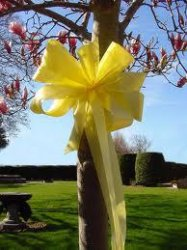 Jailed Man Who was Forgiven by His Wife (Yellow ribbons on a tree)