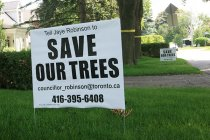 SAVE OUR TREES: Mildenhall Road resident Rick Hutcheon has distributed these signs throughout Lawrence Park, urging residents to contact Ward 25 Councillor Jaye Robinson if they want to prevent 349 trees in their neighbourhood from being uprooted during future construction.