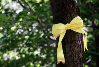 Tree with Yellow Ribbon round it