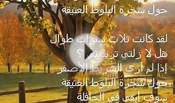 Tie a Yellow Ribbon Arabic Lyrics