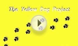 What to do if you see a dog wearing a yellow bow on its leash