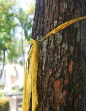 yellow-ribbon-tree-blog