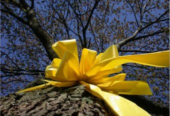 Yellow ribbon around tree for soldiers